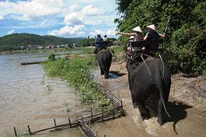 Ballade à dos d'éléphant au Vietnam