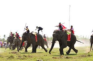 Course d'éléphants