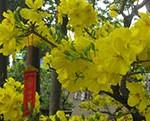 fleurs tet